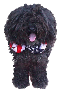 Harry-The-Puli -trans 2